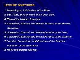 What Is The Main Function Of The Medulla Oblongata Anatomy Of The Brain Stem Ppt Video Online Download