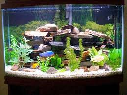 Fish tank decoration ideas plus cool aquarium decoration ideas