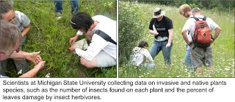 plants native to michigan do invasive species escape their enemies data nuggets