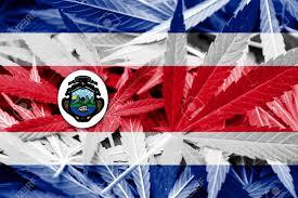 Costarican Flag Costa Rica Flag On Cannabis Background Drug Policy Legalization