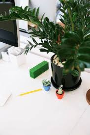 Plants For Office Best 25 Best Plants For Office Ideas On Pinterest Plants For