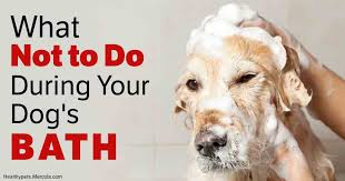 Dogs In The Bathtub How To Bathe A Dog Easily What Not To Do During Dog U0027s Bath