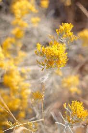 28 best desert flower caravan photo shoot images on pinterest