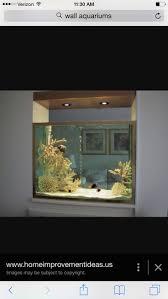 367 best aquatic images on pinterest aquarium ideas aquarium