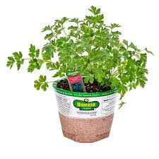 home depot spring black friday 2016 bonnie plants 3711 best gardening images on pinterest herb seeds seeds and bulbs