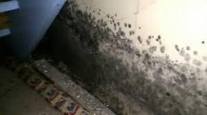 mold growth in hidden basement areas moldy basement in glen ellyn