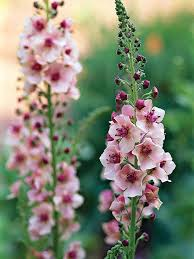 картинки по запросу pink and yellow flower names прекрасное