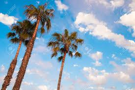 san diego palm trees and blue sky san diego southern california