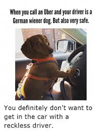 Dog Driving Meme - when you call an uber and your driver is a german wiener dog but