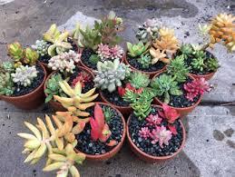 succulent pots in adelaide region sa gumtree australia free