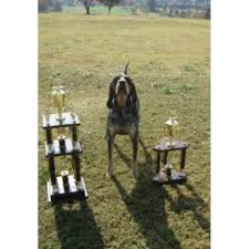 bluetick coonhound kennels in pa evenstar hounds bluetick coonhound breeder in ohatchee alabama