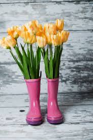 best 25 spring photography ideas on pinterest flower