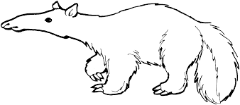 anteater coloring page picture 6350