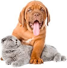 Pet Pet Supplies Food U0026 Accessories Online My Pet Warehouse