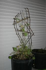 her eden mini homemade garden trellis