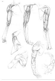 1208 best anatomia images on pinterest anatomy reference human