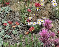 great basin native plants programs natural resources native plant communities native