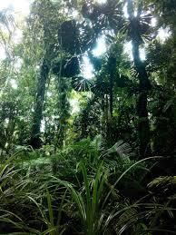 exploring daintree rainforest the oldest rainforest of the planet