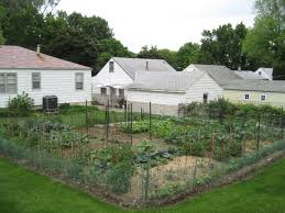 grow your own natural produce at home completely nourished