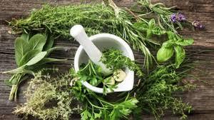 les herbes de cuisine plantes aromatiques des aliments détox qui aident à bien digérer