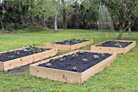 How To Plant A Vegetable Garden In Your Backyard by My Vegetable Garden The Two Bite Club
