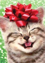 cat christmas happy kitten with bow box of 10 cat christmas cards by avanti