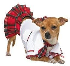 Pet Halloween Costumes Dogs 40 Dog Costumes Dog Dog Halloween Pet Costumes