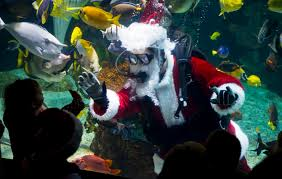 Columbus Zoo Lights by Volunteering At The Columbus Zoo Thinglink