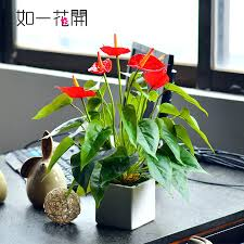best office plants best office plants nz use potted plants to
