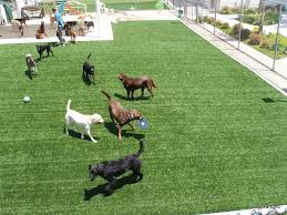Backyard For Dogs by Using Synthetic Grass For Dogs At Pet Facilities Or Your Own Backyard