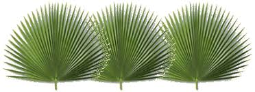 palms for palm sunday the king is coming a story about palm sunday by sue