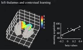 neurophysiological mechanisms involved in language learning in