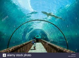 bahamas new providence nassau paradise island giant aquarium