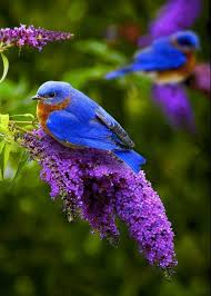 i love every beautiful things flowers and garden is one of most