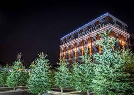 100 nordmann fir christmas tree edinburgh celebrate