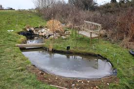 wildlife pond water features homes for wildlife the rspb