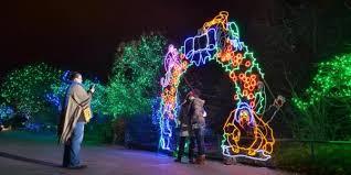 cu night at zoo lights cu boulder today university of colorado