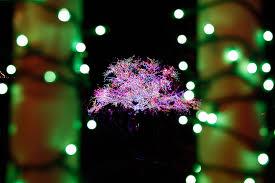 magic tree lights up living windows set to go local