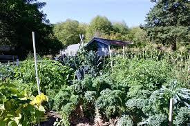 diy raised bed soil building the best garden soil diy vegetable