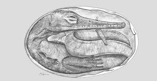 which came first the reptile or the egg the evolution institute