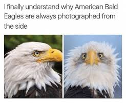 America Eagle Meme - i finally understand why american bald eagles are always