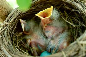 how to offer bird nesting materials in your garden the national