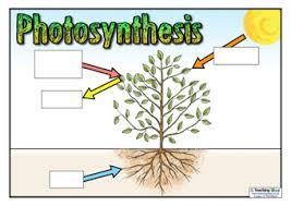 plants teaching ideas