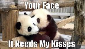Panda Mascara Meme - funny panda meme pictures best image of panda 2018