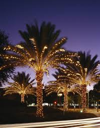 palm tree christmas twinkly lights on the palm trees at orlando