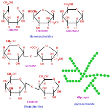 biological molecules chemistry tutorvista com