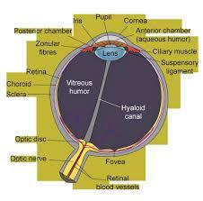 anatomy of eye ppt image collections learn human anatomy image