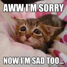 I Am Sorry Meme - aww i m sorry now i m sad too misc quickmeme
