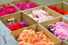knicker elastic fantastic new covent garden flower market