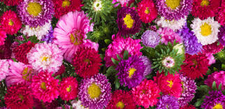 best flower delivery top 10 flower shops and florists in hong kong steps